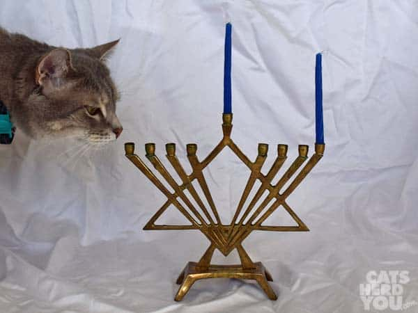 Pierre_menorah_01_wm