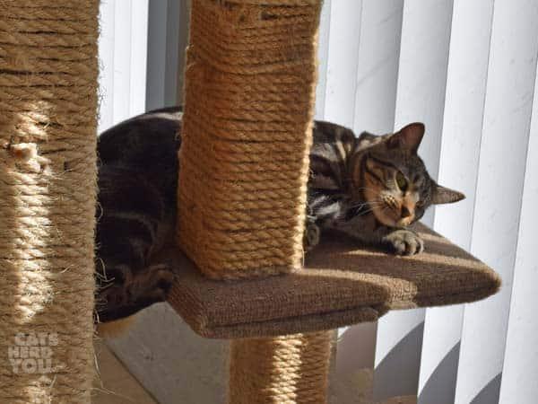 Ashton_climbing_cat_Tree_03_wm