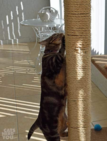 Ashton_climbing_cat_tree_01_wm