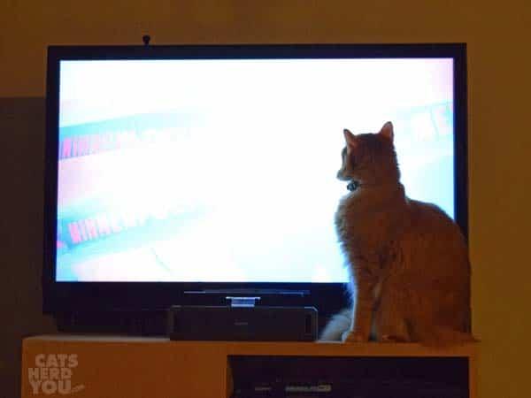 Newton_watches_tv_wm