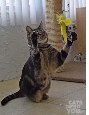 Ashton grabs for feather toy