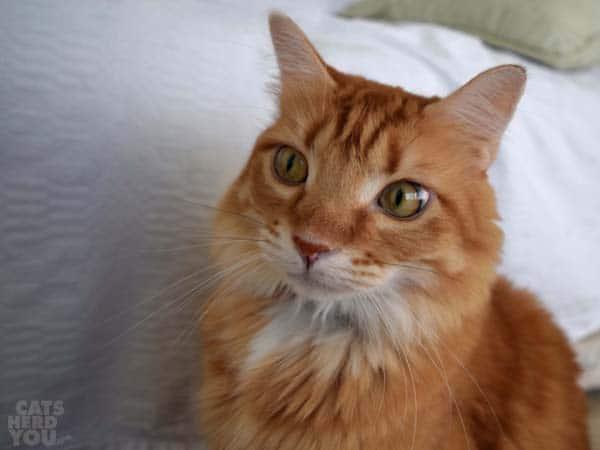 wide-eyed Newton