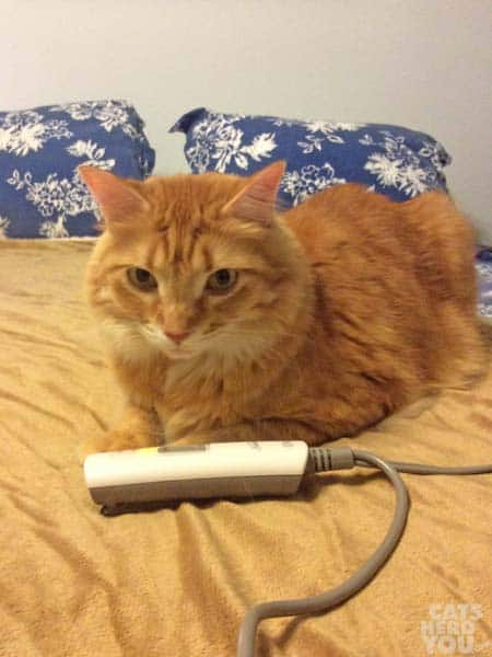 Newton with heated blanket controller