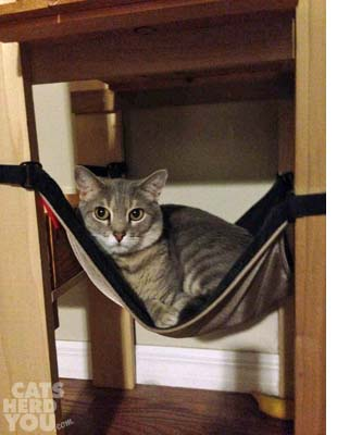 Pierre in his hammock