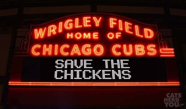 Wrigley_LED_Save_Chickens_wm