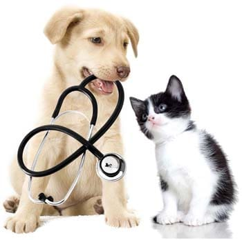 Puppy and kitten with stethescope