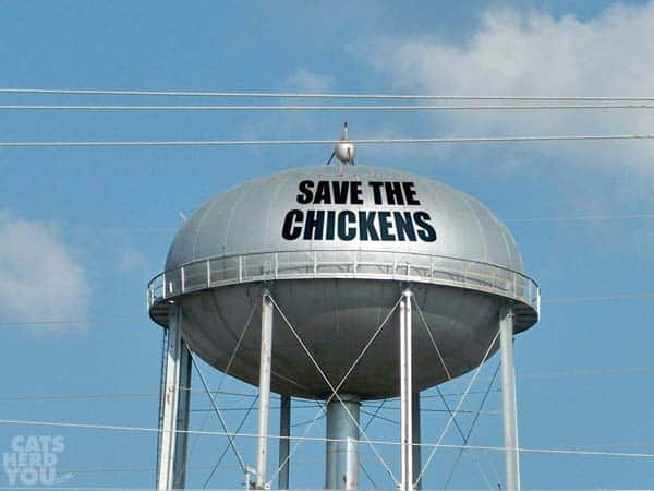 Save the Chickens painted on water tower