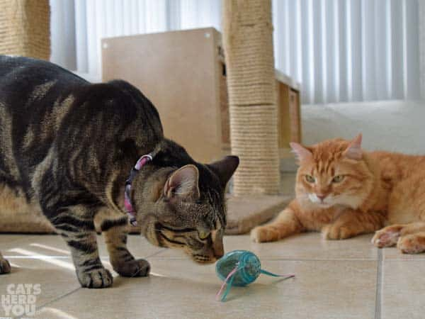 Ashton and Newton with the catnip egg