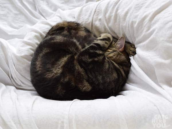Ashton naps in a ball