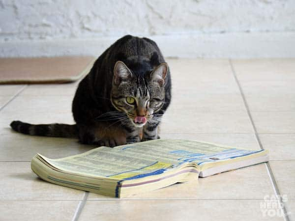 Ashton licks her chops over the yellow pages