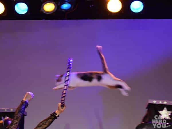 Long_jumping_kitty_wm