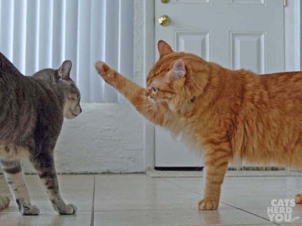 Newton offers Pierre a high paw