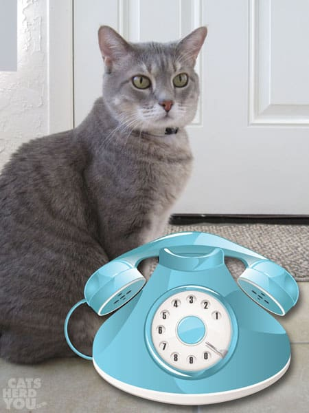 Pierre and old-fashioned phone
