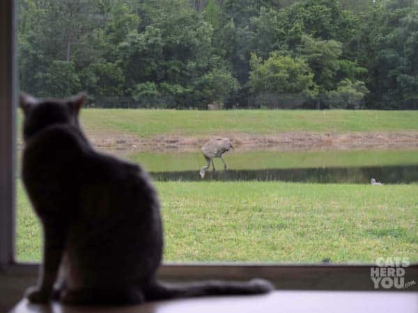 Pierre looks out at sand hill cranes