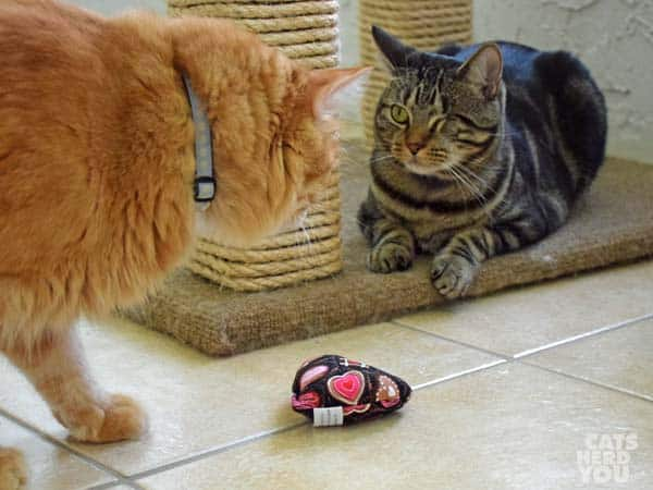 Newton faces Ashton over catnip heart