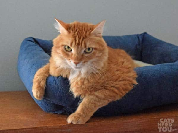 Newton on his blue bed