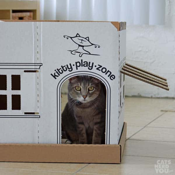 Pierre helps assemble kitty play zone