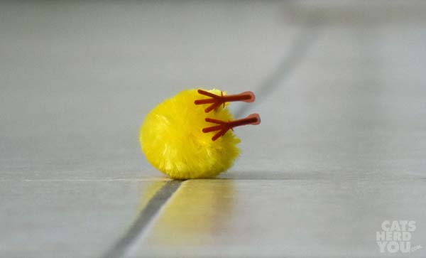 capsized tiny chick