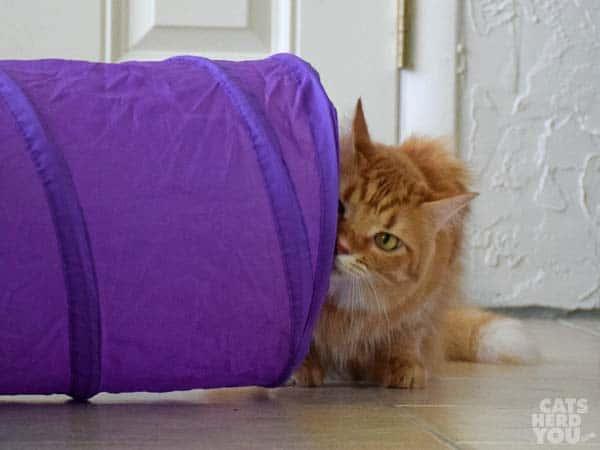 Newton lurks around the corner of the tunnel