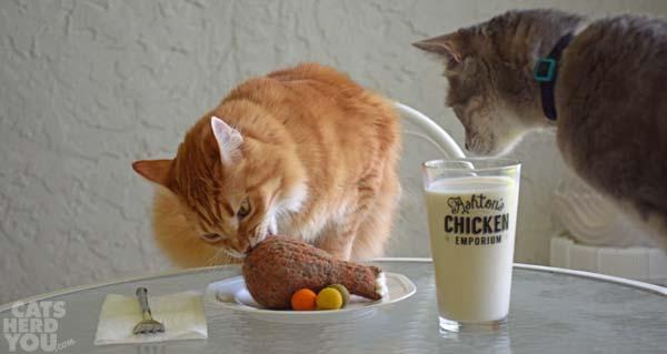 Newton and Pierre plunder Ashton's chicken dinner