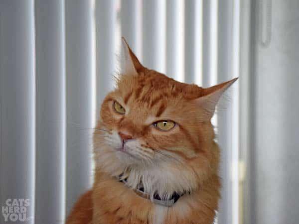 Newton looks skeptical