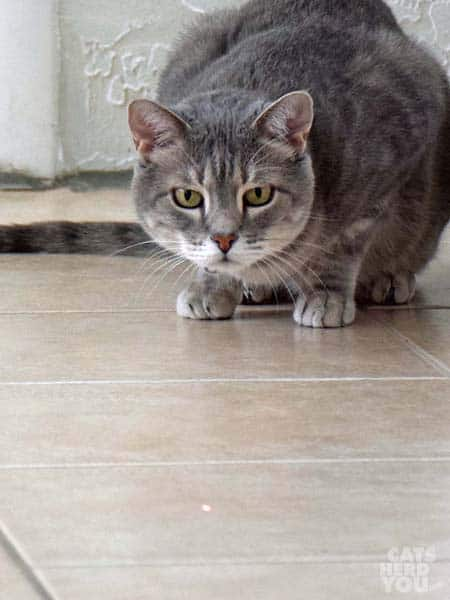 Pierre watches the red dot on the tile