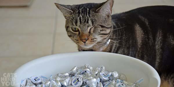 Ashton peers over edge of candy bowl