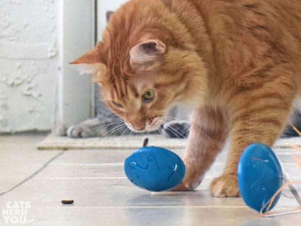 Newton drops the puzzle feeder