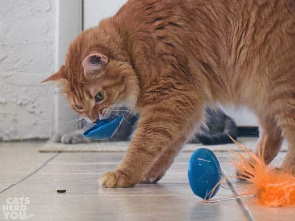 Newton picks up the puzzle feeder