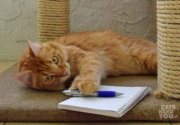 Cat essay writer uae