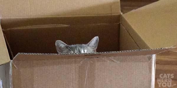 Pierre in box