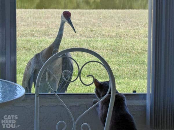 Pierre peers out the window at sandhill crane