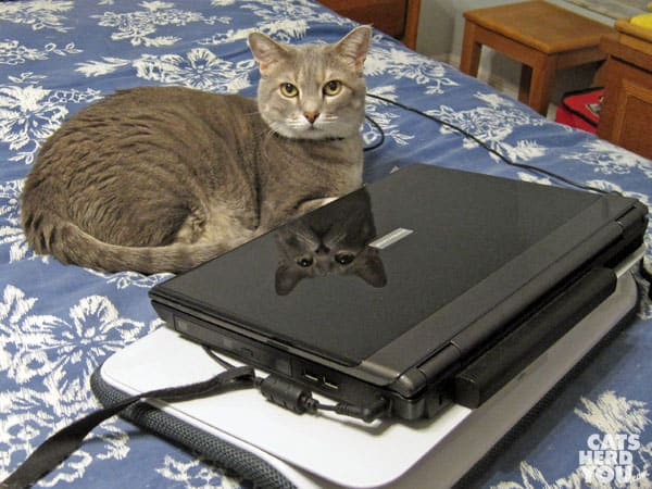 Pierre with laptop