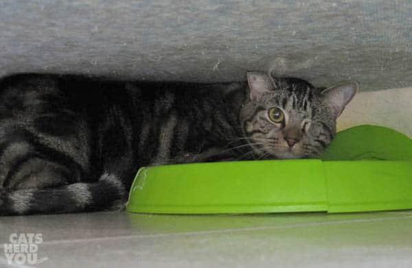 Ashton hides under sofa