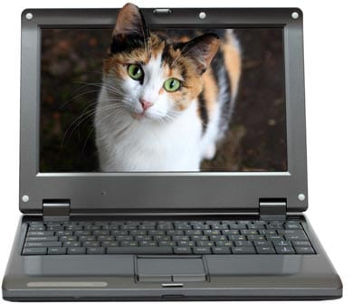 small laptop with calico