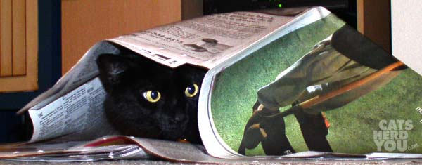 black cat under newspaper