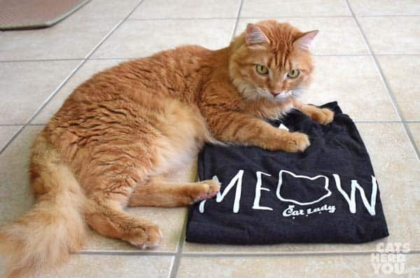orange tabby cat lounges on black CatLady shirt