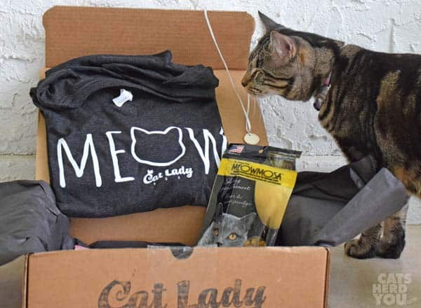 brown tabby cat looks at CatLadyBox contents