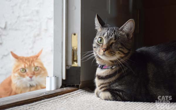 brown tabby cat by open door with orange tabby cat outside