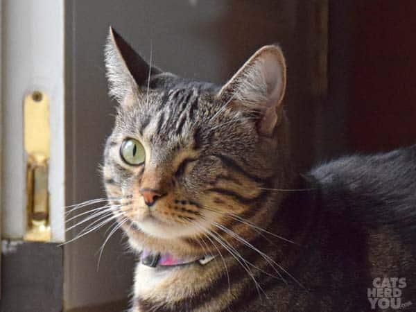 brown tabby cat by open door