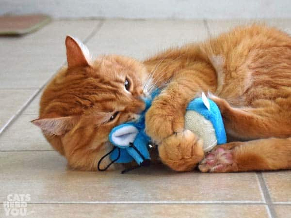orange tabby cat and Multiplet catnip mouse