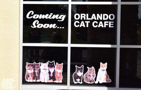 cat cafe coming soon window