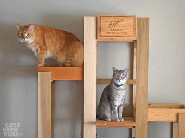 orange tabby cat and gray tabby cat on wine crate cat tree