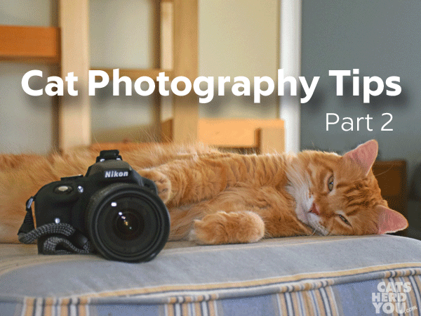 cat photography tips part 2
