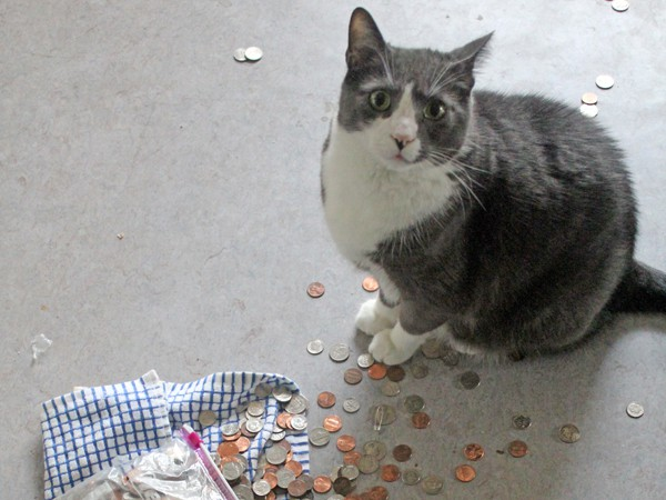 cat with scattered coins