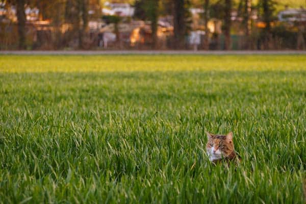 cat in field - CC image courtesy usfotografie on flickr