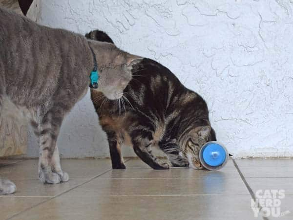 brwon tabby cat works on treat dispensing cat toy as gray tabby cat looks on
