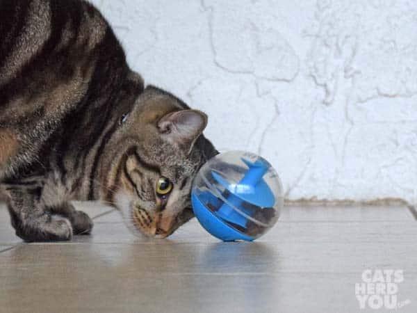one-eyed brown tabby cat eyes treat-dispensing toy