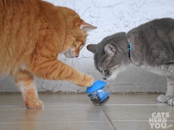 orange tabby cat and gray tabby cat with treat toy
