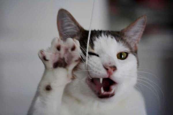 cat biting string